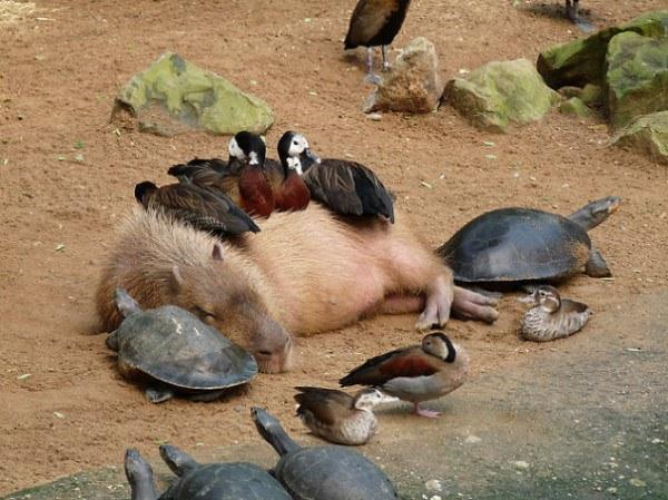 diaforetiko.gr : 551902793c57b 30 ασυνήθιστα παρεάκια του ζωικού βασιλείου που λατρεύουν τις αγκαλιές.