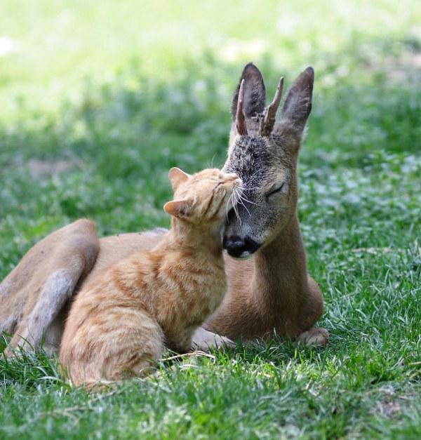 diaforetiko.gr : 5519027a1c688 30 ασυνήθιστα παρεάκια του ζωικού βασιλείου που λατρεύουν τις αγκαλιές.