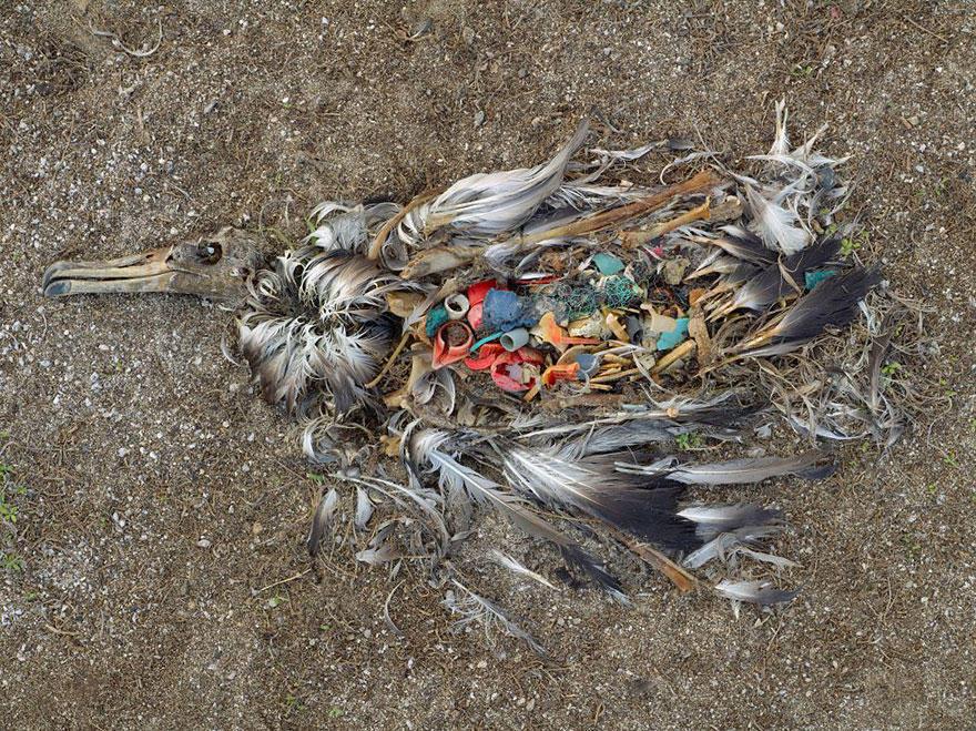 σκουπίδια ζώα