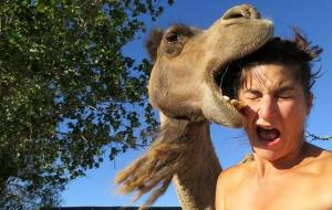 448586-camel