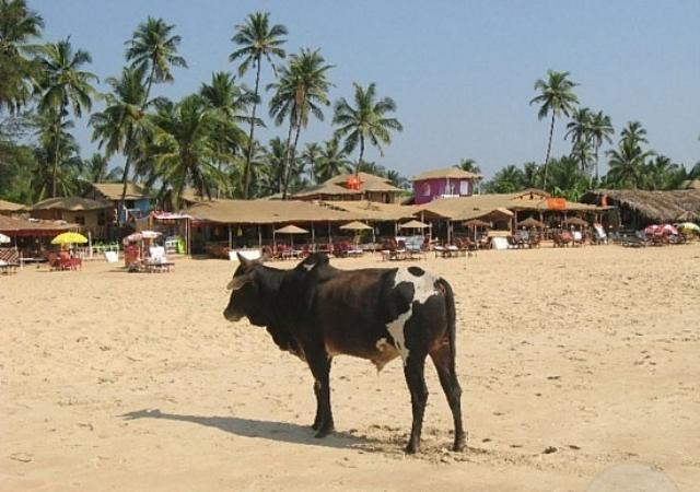 fanpage.gr : beach7 15 Παράξενες παραλίες που υπάρχουν στον κόσμο