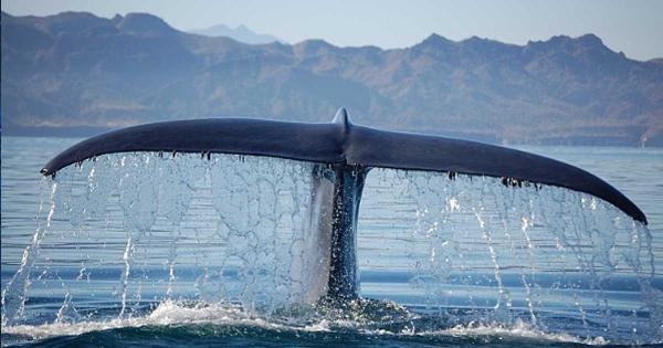 diaforetiko.gr : 120279 1200x630 600x315 Έσωσαν τη φάλαινα κι εκείνη τους ευχαρίστησε! Δείτε το συγκινητικό βίντεο.