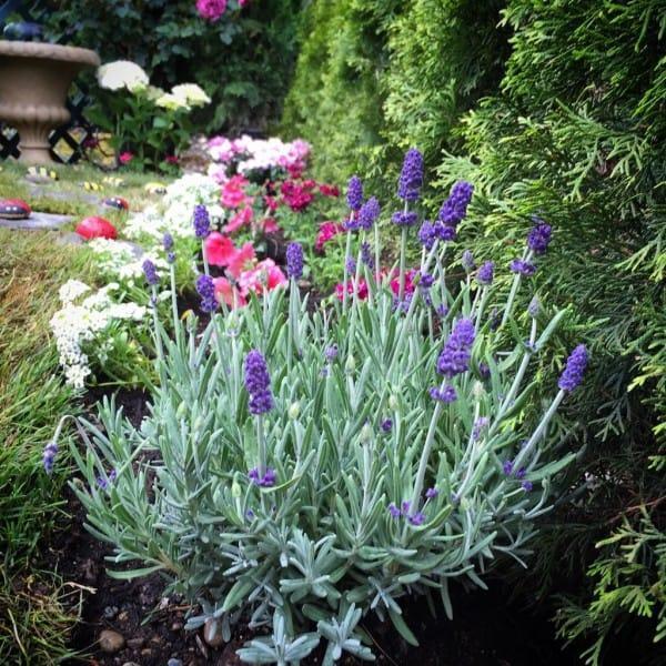 diaforetiko.gr : 145 600x600 Μεταμόρφωσε την βαρετή αυλή της σε ένα μυστικό κήπο που μοιάζει να ξεπήδησε από σελίδες παραμυθιών! ΕΚΠΛΗΚΤΙΚΗ ΙΔΕΑ !!!