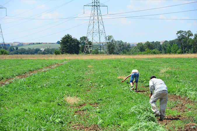 diaforetiko.gr : DSC 9676 Πρώτη φορά νέοι Έλληνες στα χωράφια για δουλειά! Οι αλλοδαποί φεύγουν, οι ντόπιοι έρχονται