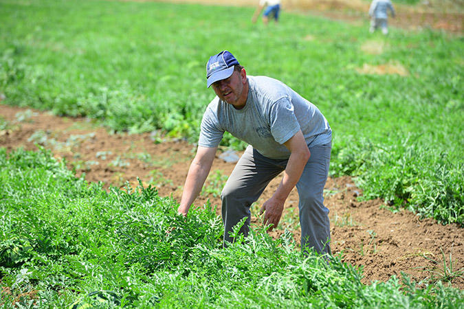 diaforetiko.gr : DSC 9688 Πρώτη φορά νέοι Έλληνες στα χωράφια για δουλειά! Οι αλλοδαποί φεύγουν, οι ντόπιοι έρχονται