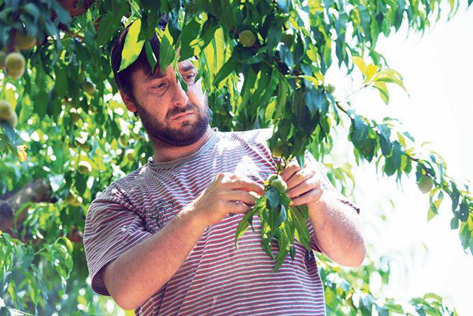diaforetiko.gr : F3 15 upsos zdragkas Πρώτη φορά νέοι Έλληνες στα χωράφια για δουλειά! Οι αλλοδαποί φεύγουν, οι ντόπιοι έρχονται