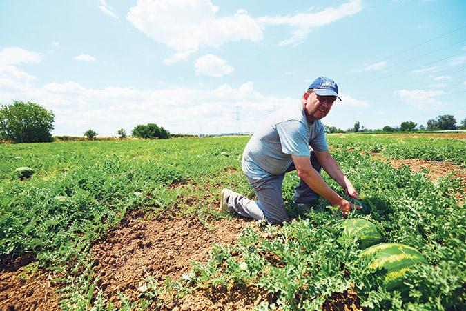 diaforetiko.gr : F4 15 upsos gravanis Πρώτη φορά νέοι Έλληνες στα χωράφια για δουλειά! Οι αλλοδαποί φεύγουν, οι ντόπιοι έρχονται