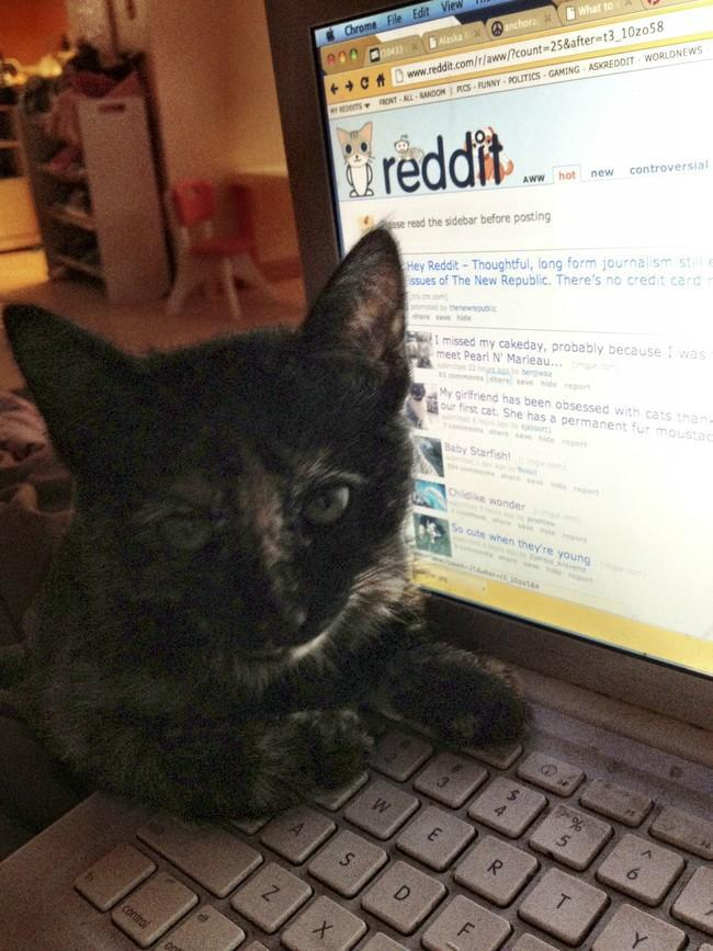 diaforetiko.gr : desktop 1434570779 25 ζώα που πέρασαν τη ζήλια σε άλλο επίπεδο!