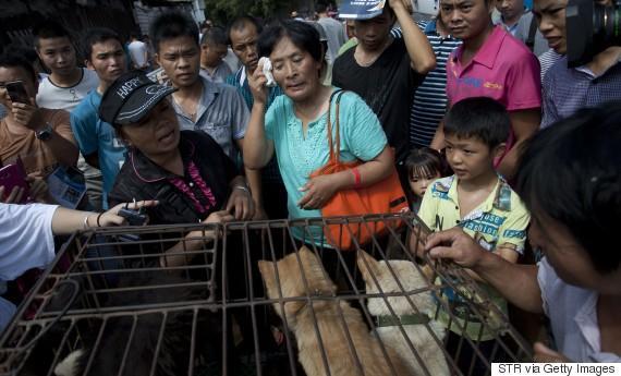 diaforetiko.gr : o YANG XIAOYUN 570 1 Η συνταξιούχος που αγοράζει σκυλιά για να τα σώσει από τη σφαγή στο «Φεστιβάλ Σκυλίσιου Κρέατος» της Κίνας!