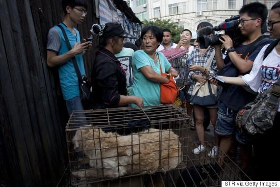 diaforetiko.gr : o YANG XIAOYUN 570 2 Η συνταξιούχος που αγοράζει σκυλιά για να τα σώσει από τη σφαγή στο «Φεστιβάλ Σκυλίσιου Κρέατος» της Κίνας!