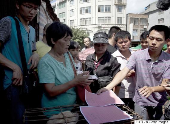 diaforetiko.gr : o YANG XIAOYUN 570 Η συνταξιούχος που αγοράζει σκυλιά για να τα σώσει από τη σφαγή στο «Φεστιβάλ Σκυλίσιου Κρέατος» της Κίνας!
