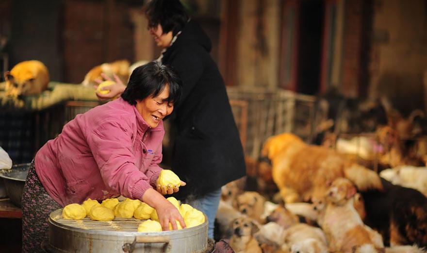diaforetiko.gr : rescued dogs yulin dog meat festival china 10 Η συνταξιούχος που αγοράζει σκυλιά για να τα σώσει από τη σφαγή στο «Φεστιβάλ Σκυλίσιου Κρέατος» της Κίνας!