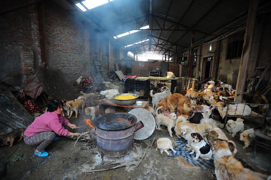 diaforetiko.gr : rescued dogs yulin dog meat festival china 11 Η συνταξιούχος που αγοράζει σκυλιά για να τα σώσει από τη σφαγή στο «Φεστιβάλ Σκυλίσιου Κρέατος» της Κίνας!