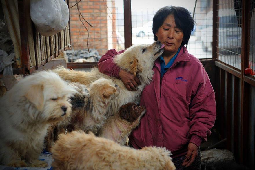 diaforetiko.gr : rescued dogs yulin dog meat festival china 12 Η συνταξιούχος που αγοράζει σκυλιά για να τα σώσει από τη σφαγή στο «Φεστιβάλ Σκυλίσιου Κρέατος» της Κίνας!