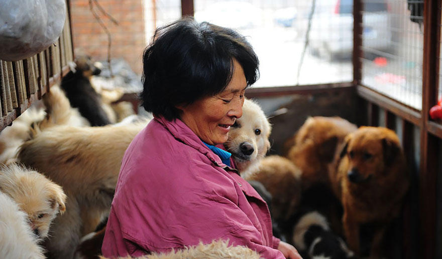 diaforetiko.gr : rescued dogs yulin dog meat festival china 17 Η συνταξιούχος που αγοράζει σκυλιά για να τα σώσει από τη σφαγή στο «Φεστιβάλ Σκυλίσιου Κρέατος» της Κίνας!