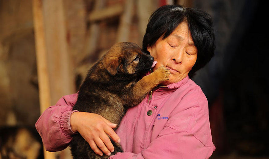 diaforetiko.gr : rescued dogs yulin dog meat festival china 19 Η συνταξιούχος που αγοράζει σκυλιά για να τα σώσει από τη σφαγή στο «Φεστιβάλ Σκυλίσιου Κρέατος» της Κίνας!