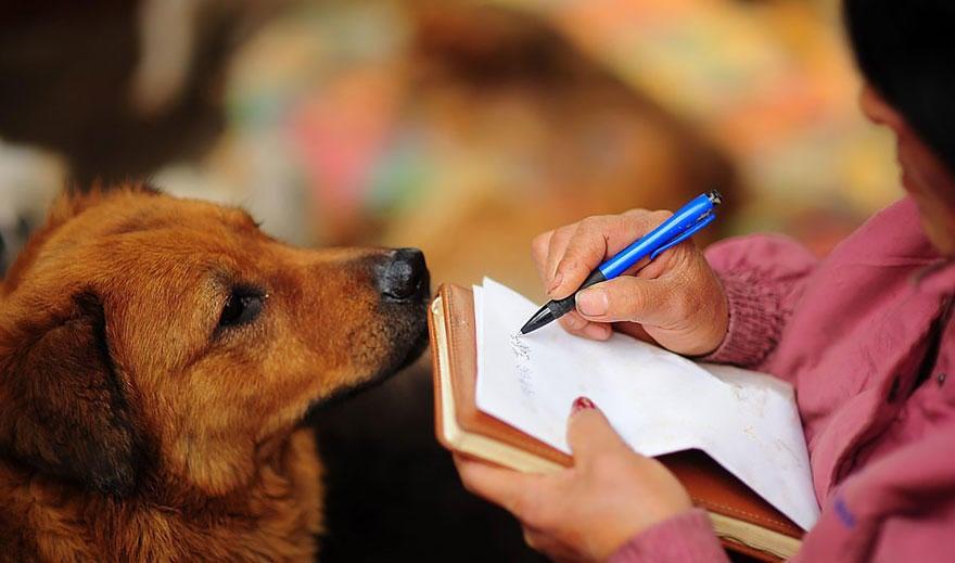 diaforetiko.gr : rescued dogs yulin dog meat festival china 20 Η συνταξιούχος που αγοράζει σκυλιά για να τα σώσει από τη σφαγή στο «Φεστιβάλ Σκυλίσιου Κρέατος» της Κίνας!
