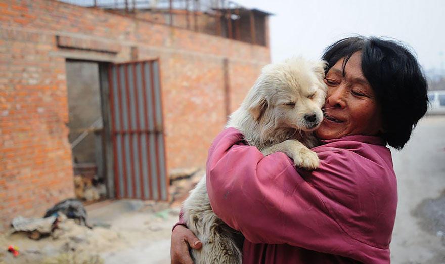 diaforetiko.gr : rescued dogs yulin dog meat festival china 5 Η συνταξιούχος που αγοράζει σκυλιά για να τα σώσει από τη σφαγή στο «Φεστιβάλ Σκυλίσιου Κρέατος» της Κίνας!