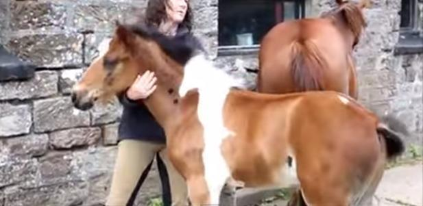 Απίστευτο: Πουλάρι γεννήθηκε με ένα τεράστιο σημάδι σε σχήμα μικρού αλόγου!