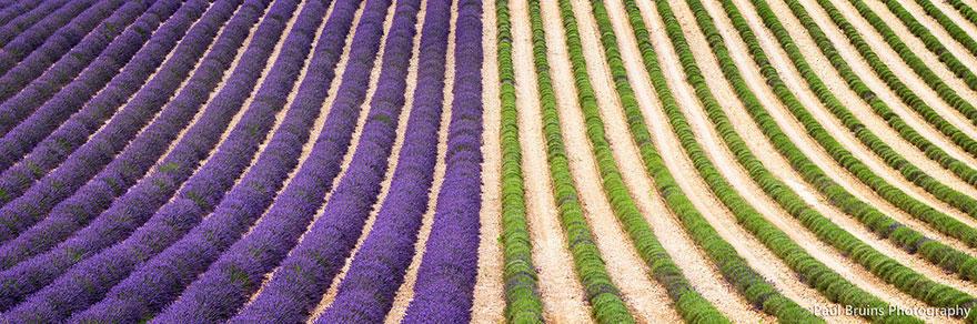 diaforetiko.gr : lavender fields harvesting 3 Η διαδικασία συγκομιδής λεβάντας είναι η πιο εντυπωσιακή εργασία που είδατε ποτέ!