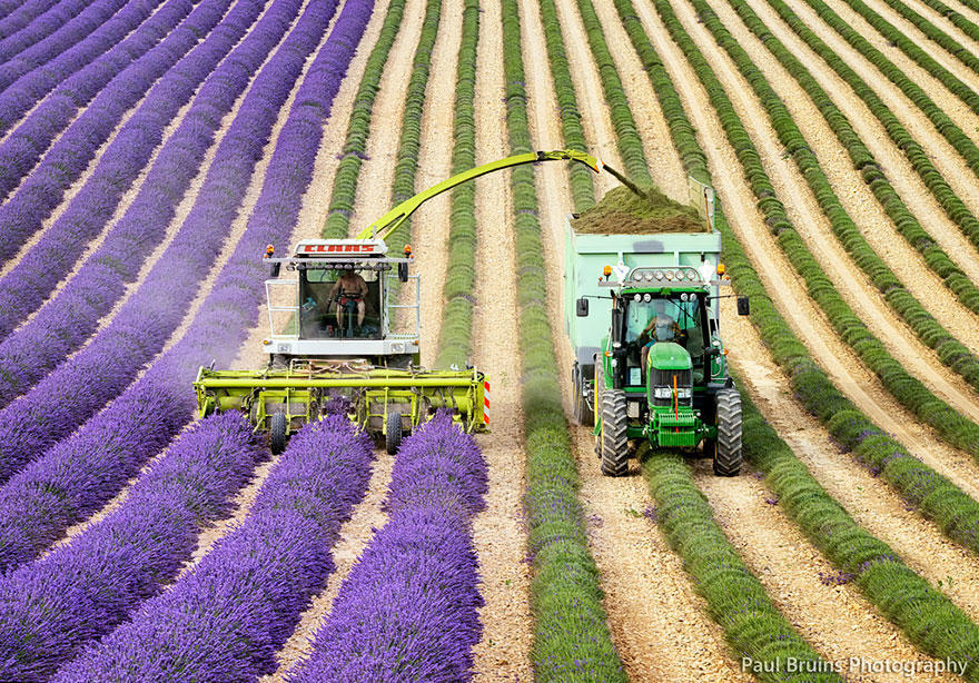 diaforetiko.gr : lavender fields harvesting 4 Η διαδικασία συγκομιδής λεβάντας είναι η πιο εντυπωσιακή εργασία που είδατε ποτέ!