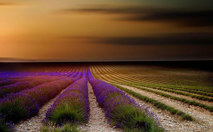 diaforetiko.gr : lavender fields harvesting 71 Η διαδικασία συγκομιδής λεβάντας είναι η πιο εντυπωσιακή εργασία που είδατε ποτέ!