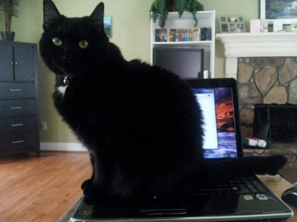 diaforetiko.gr : lifebuzz 366f0558fcc383f23877011d9c516232 limit 2000 25 Αγενείς γάτες που δεν νοιάζονται αν είσαι απασχολημένος ή όχι…Η νο19 έχει ξεφύγει εντελώς!