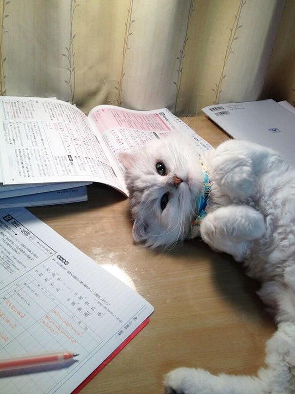 diaforetiko.gr : lifebuzz 392a5e2b4c5aa6397766d6f7697f45ab limit 2000 25 Αγενείς γάτες που δεν νοιάζονται αν είσαι απασχολημένος ή όχι…Η νο19 έχει ξεφύγει εντελώς!