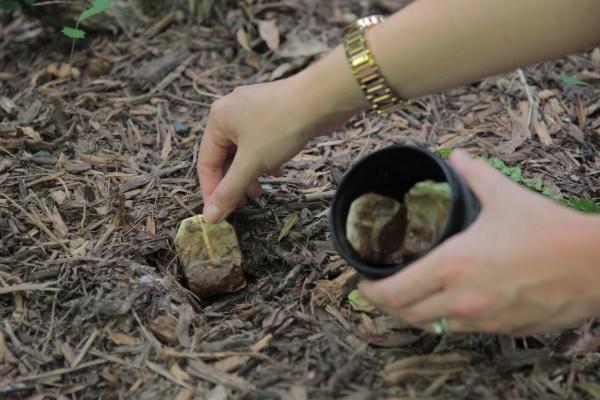 diaforetiko.gr : 55b8a8001d740 Μην τα πετάτε! 12 Εκπληκτικά πράγματα που μπορείτε να κάνετε με χρησιμοποιημένα σακουλάκια τσαγιού