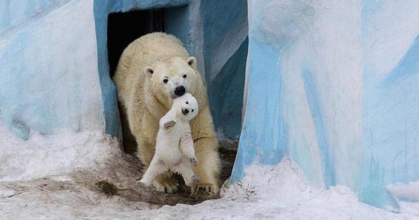 15 ζώα που δεν ανέχονται άλλο τα καπρίτσια των παιδιών τους!
