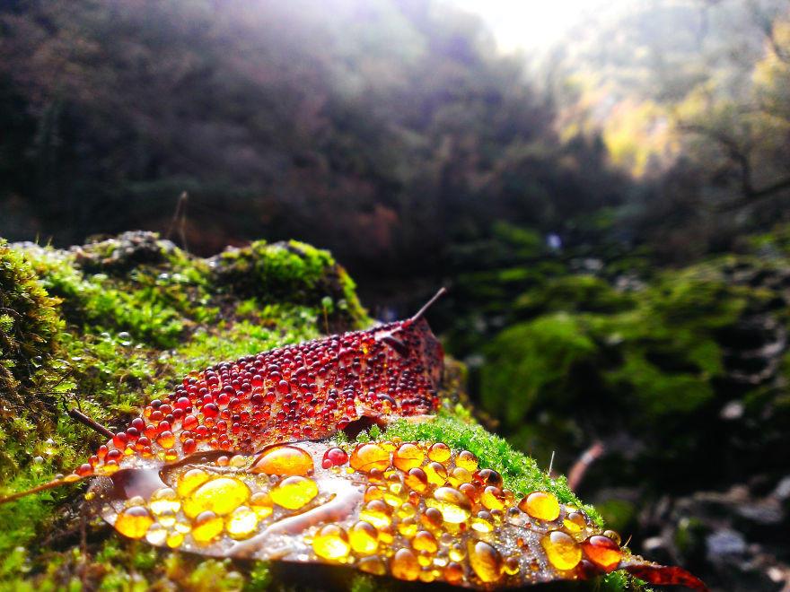 tilestwra.com | 40 υπέροχες φωτογραφίες που αποδεικνύουν ότι το φθινόπωρο είναι μια μαγική εποχή
