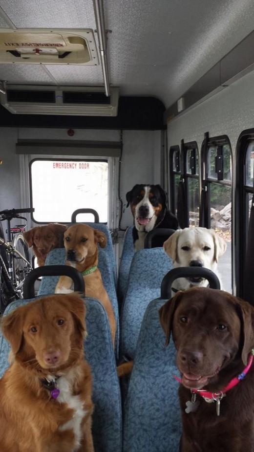 diaforetiko.gr : 883857 KOV1HXnmQteMQsIdiLdx d12 13 φωτογραφίες ζώων που συνταξιδεύουν σε αμφιλεγόμενη κατάσταση ενθουσιασμού