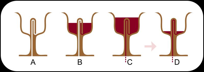 tilestwra.com | Tι είναι η έξυπνη κούπα του φιλοσόφου Πυθαγόρα και πώς πρέπει να πίνουμε το κρασί