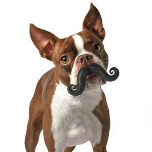 lifebuzz 09de0e58526a577b5c94d95804c35176 limit 2000 20 Περίεργα πράγματα που μπορείς να αγοράσεις για τον σκύλο σου…Το #5 είναι φανταστική ιδέα.