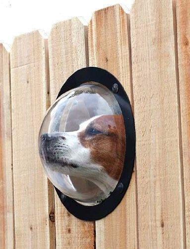 lifebuzz 44bff151beb51cb81c439bf2baae5fa7 limit 2000 20 Περίεργα πράγματα που μπορείς να αγοράσεις για τον σκύλο σου…Το #5 είναι φανταστική ιδέα.