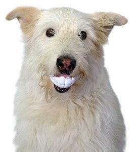 lifebuzz 7d2e0eccf5013b6c25fe9ee9bd007ca2 limit 2000 20 Περίεργα πράγματα που μπορείς να αγοράσεις για τον σκύλο σου…Το #5 είναι φανταστική ιδέα.