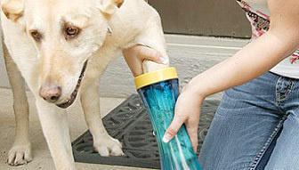 lifebuzz 92b86d7708d971df7ffe12dc8a37fb89 limit 2000 20 Περίεργα πράγματα που μπορείς να αγοράσεις για τον σκύλο σου…Το #5 είναι φανταστική ιδέα.