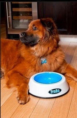 lifebuzz a812538f721a08f8400fb8e6776b047f limit 2000 20 Περίεργα πράγματα που μπορείς να αγοράσεις για τον σκύλο σου…Το #5 είναι φανταστική ιδέα.