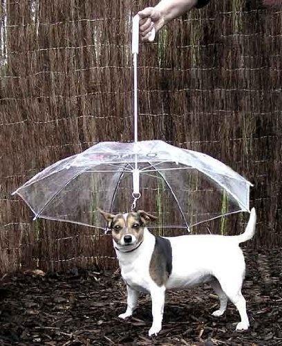 lifebuzz d4cac3cca106187d203127167add24f0 limit 2000 20 Περίεργα πράγματα που μπορείς να αγοράσεις για τον σκύλο σου…Το #5 είναι φανταστική ιδέα.