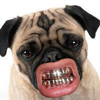 lifebuzz eb3bb10d7636d0bb8b31d43d5b395062 limit 2000 20 Περίεργα πράγματα που μπορείς να αγοράσεις για τον σκύλο σου…Το #5 είναι φανταστική ιδέα.