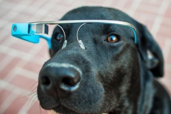 lifebuzz fb49e979fd9271be4865655b08d58ce9 limit 2000 20 Περίεργα πράγματα που μπορείς να αγοράσεις για τον σκύλο σου…Το #5 είναι φανταστική ιδέα.