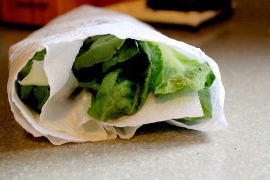 25ST-lettuce_papertowel