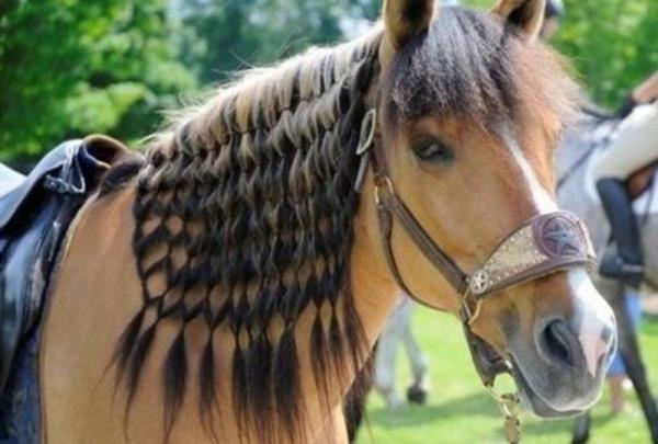 30 Ζώα που ξέρουν να περιποιούνται τα μαλλιά τους…στο νο26 έχουμε την πιο σέξι γάτα.