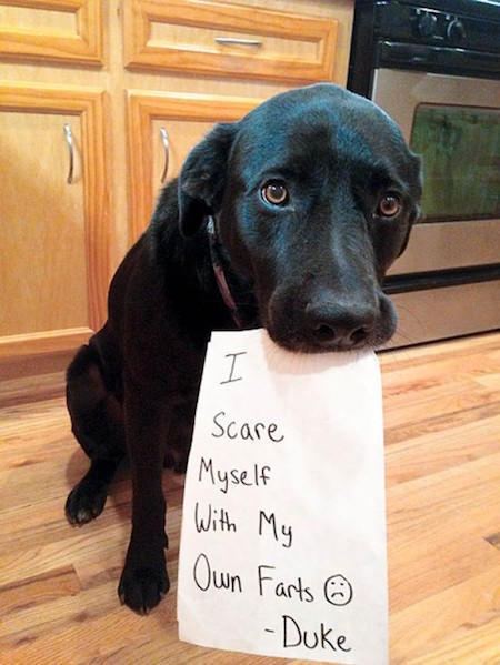 guilty-dog-shaming-fart-500x666