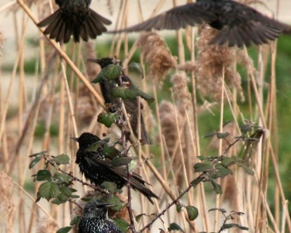 παλιό πουλί φωτογραφίες μαύρο ροζ μουνί φωτογραφίες