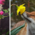 animals-smelling-flowers-fb3-810x425 [resize]1200630