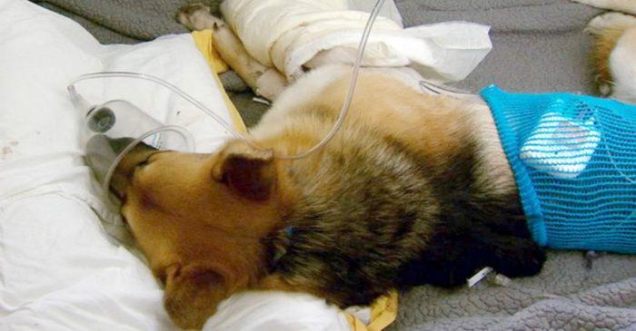 Ο σκύλος της οικογένειας πήδηξε μπροστά στην κόρη με προτεταμένα τα δόντια του. κανείς δεν φανταζόταν τον λόγο που το έκανε.