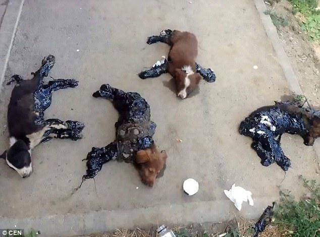 Ανείπωτη ΦΡΙΚΗ: 4 Κουτάβια Βρέθηκαν Κολλημένα στο Έδαφος, Πασαλειμμένα με καυτή Πίσσα.