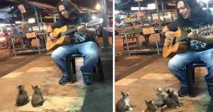cats-listening-music-street-musician-jass-pangkor-buskers-malaysia-2 [resize]1200630