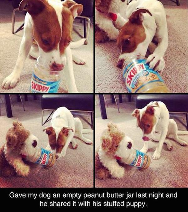 pictures-that-only-dog-lovers-will-truly-appreciate-16